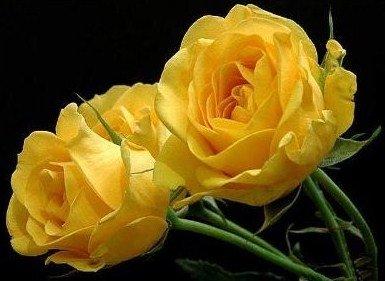dans fleurs img01