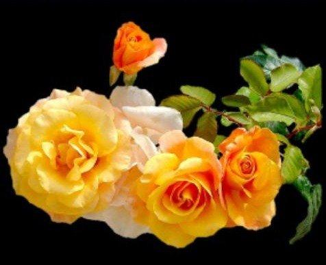 img12 dans fleurs