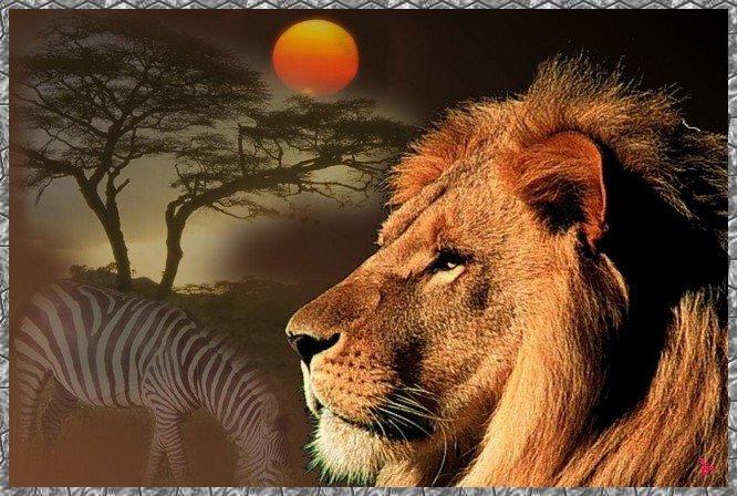 le roi de la jungle. dans animaux 22e4864f