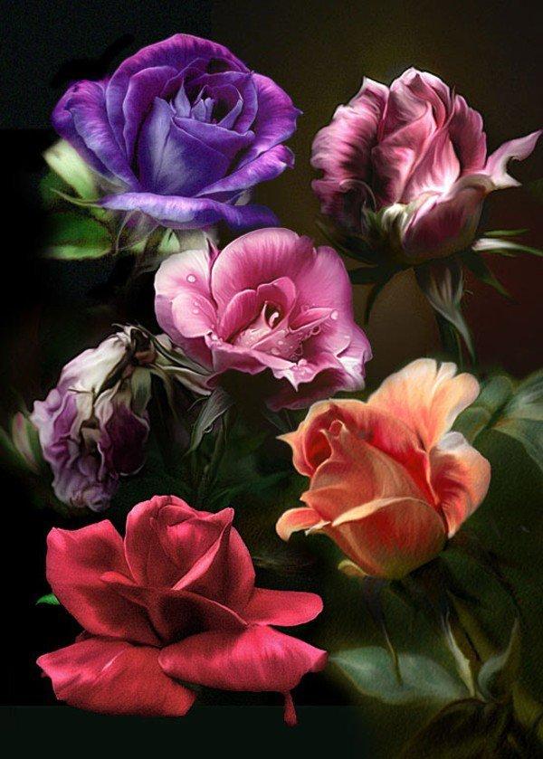 dans fleurs 2961753537_2_3_TSsn5YUm